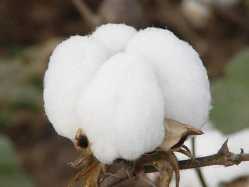客岁中国纺织业同比增加7.4%