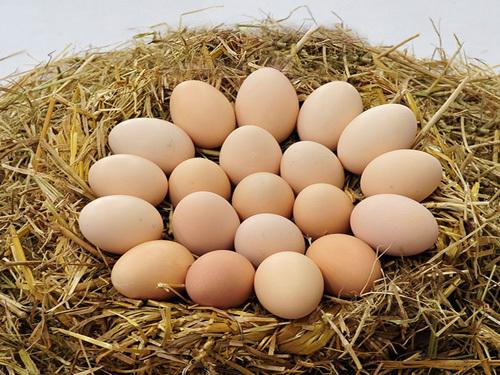 未来中国鸡蛋加工将暴增30倍