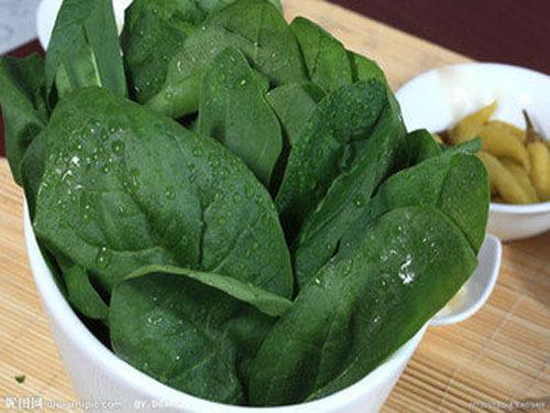 吃菠菜红根一定要留着 挑菠萝绿叶扎手的很甜