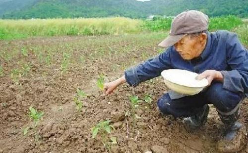 化肥與有機肥搭配使用的好處