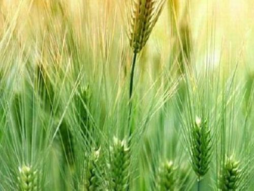 2020年农药使用量力争零增长