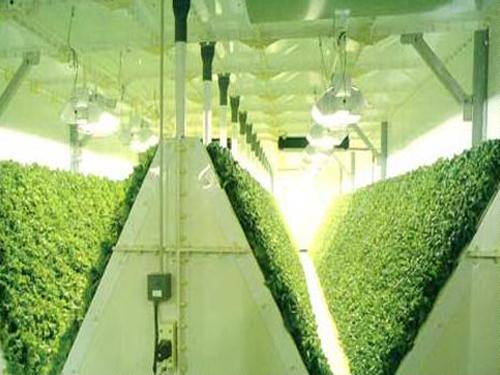 植物照明 光源组合下的智慧调控