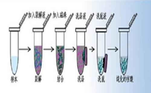 磁珠法核酸提取过程中的6种常见误区