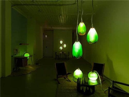 酷炫海藻是LED灯泡又是食物