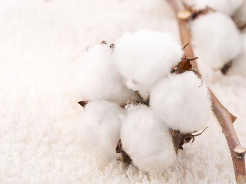 棉花策略:高庫存下弱勢難改