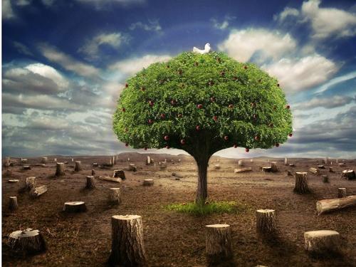 山东森林资源条例实施严格措施