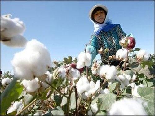 去年秋天收了棉花后,阿布都瓦依提·