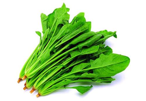蔬菜 500_346