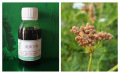 天然植物提取物蛇床子油的药用价值