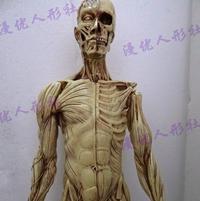 ... 艺用人体肌肉骨骼解剖模型 美术人体模型 解剖结构