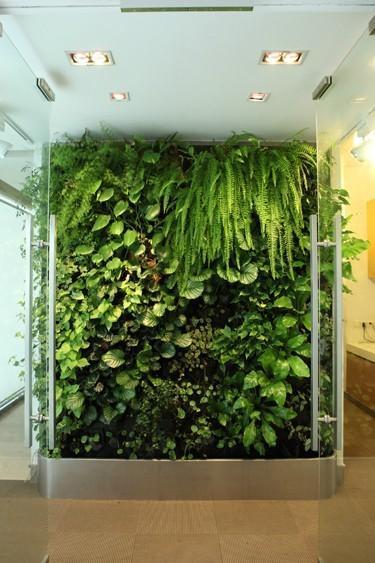 植物屏风图片