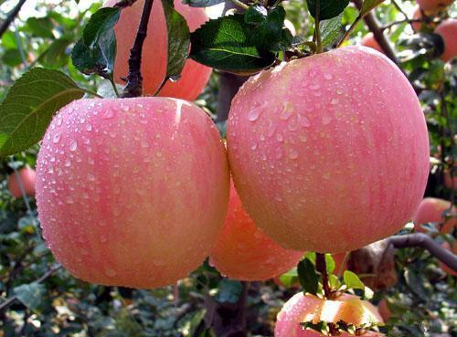 苹果人图片大全可爱