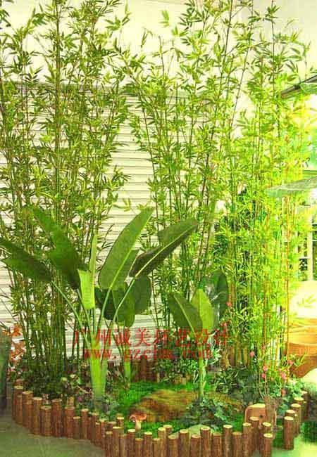 景观植物图例上色