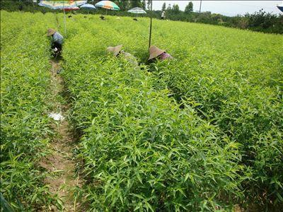 桃树苗 中国制造网,古今花卉苗圃场