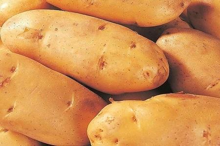 土豆简笔画带颜色
