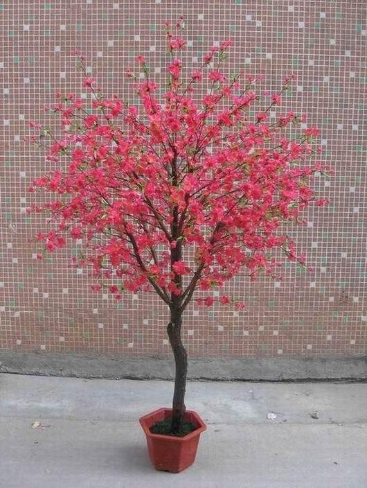 梦见屋前桃花树开花