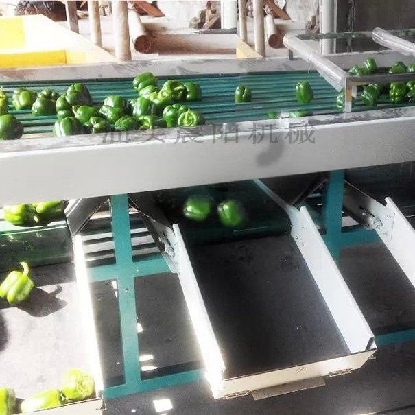 水果清洗分级机