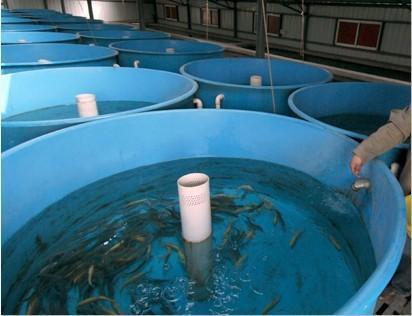 鱼苗孵化 鱼苗孵化池设计 鱼苗孵化桶
