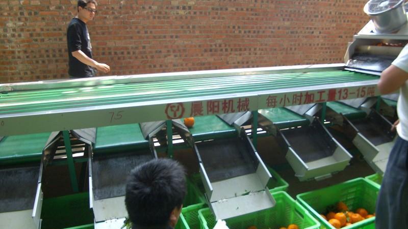 晨阳带叶水果,分级机cy7-7 小时4-5吨