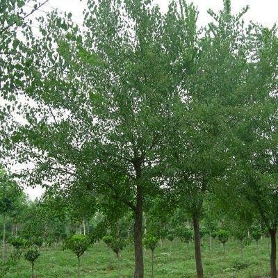 """具有悠久的花卉栽培历史,享有"""" """".现花木种植面积达30万亩,"""