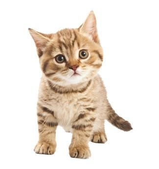 可爱猫咪萌宠画