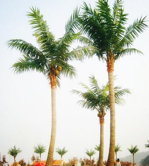 建筑手绘椰子树图片