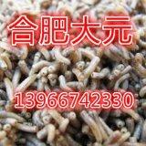 专业苍蝇养殖 蝇蛆 蝇蛆种蛹 蝇种 苍蝇种养殖技术