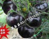 黑番茄种子市场最黑的番茄种子