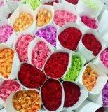 恩花康乃馨鲜花批发花店家庭用花 情人节鲜花