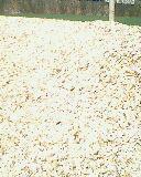 骨粉(50-40-25)