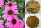 天然植物提取 紫錐菊提取物