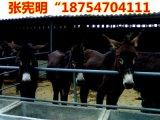 山西驢價格¥活驢價格行情¥一頭小驢價格是多少