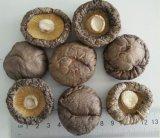 随州香菇产地大量供应香菇干货 3-5cm光面菇