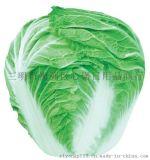 黔货出山绿色有机蔬菜大白菜