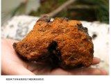 桦褐孔菌代加工