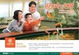 广州慧盈印刷专业印刷画册印刷折页宣传单手提袋海报