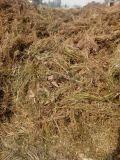 生产各种型号豆秸粉 喂羊豆秸草粉厂家