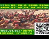 代銷四川廣漢,五黑綠殼蛋雞苗,免費提供技術指導