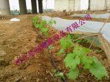 海南滴水管价格 优质滴灌管批发