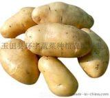 唐山市玉田县冬瓜、大葱、白菜、芥菜、甘蓝、土豆