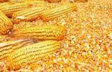 求购次粉、油糠、玉米