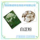 白芷粉 植物提取物 斯諾特生物