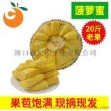 海南三亚菠萝蜜