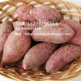 北京烟薯14红薯品种 北京烟薯14红薯产地