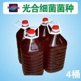 【厂家直销】饲料添加剂 微生态制剂 光合细菌菌种