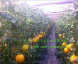 大棚建设-蔬菜大棚建设注意事项-寿光市万禾农业