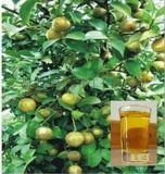 天然植物提取物 茶油