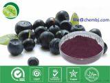 抗氧化,巴西莓提取物,Acai Berry Extract,花青素含量