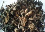 东北野生松蘑