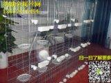 加粗鸽笼,鸽笼三层,鸽笼子用品,鸽子笼配件